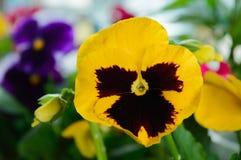 Mały jaskrawy kwiat obrazy royalty free