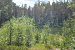 Mały jezioro chujący wśród drzew obrazy stock