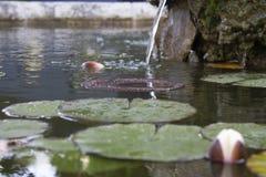 Mały jezioro z unosić się liście lotosowy kwiat obraz stock