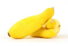 mały kabaczka lato kolor żółty Fotografia Royalty Free