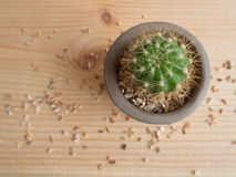 Mały kaktus w Dużym świacie Obraz Stock