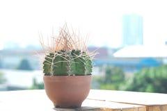 Mały kaktus W plastikowych garnkach fotografia stock