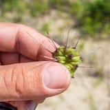 Mały kawałek kaktus zdjęcie stock
