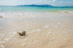 Mały kawałek krakingowy koral na plaży Obraz Stock