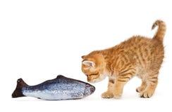 Mały kiciuni i ryba łosoś Fotografia Stock