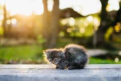 Mały kiciuni obsiadanie na ławce w lata świetle słonecznym Obrazy Royalty Free