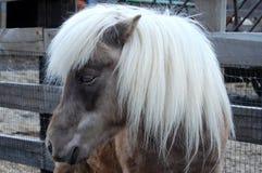 Mały koń Zdjęcia Royalty Free