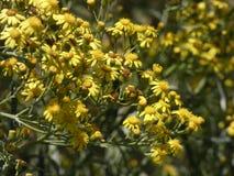 Mały kolor żółty kwitnie w wiośnie zdjęcia royalty free