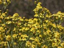 Mały kolor żółty kwitnie w wiośnie obrazy royalty free