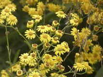 Mały kolor żółty kwitnie w wiośnie zdjęcie stock