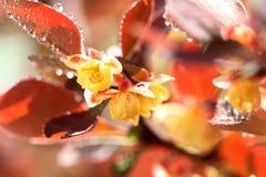 Mały kolor żółty kwitnie z kroplami na liściach zdjęcie stock
