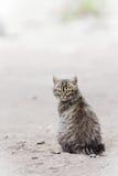 Mały kot Zdjęcia Royalty Free