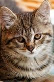 mały kot obrazy royalty free