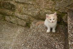 mały kot Zdjęcie Royalty Free
