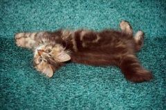 Mały kot bawić się na łóżku obrazy stock