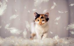 Mały kot i piórka fotografia royalty free