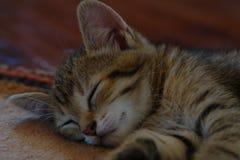 mały kot Imię ryś Uśpiony bardzo szczęśliwy obraz royalty free