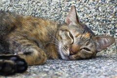 Mały kot kłamał w kącie budynek Zdjęcie Royalty Free