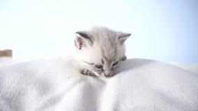 Mały kot na poduszce zbiory