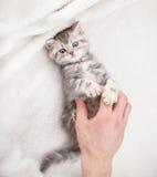 Mały kot w domu zdjęcie royalty free