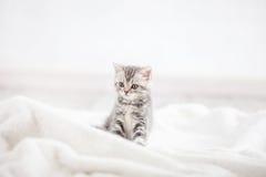 Mały kot w domu zdjęcie stock