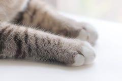 Mały kota ` s nóg spojrzenie śliczny Obrazy Stock