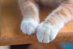 Mały kota ` s nóg spojrzenie śliczny Fotografia Stock