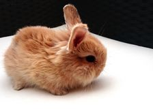 mały królik obrazy stock