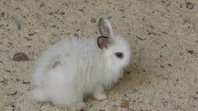 mały królik zbiory