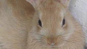 mały królik zdjęcie wideo