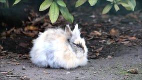 Mały królik outside zbiory wideo