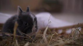 Mały królika obsiadanie w kosz Wielkanocny świętowanie zbiory