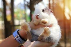 mały królika Round kształt, niósł do karmy obraz stock