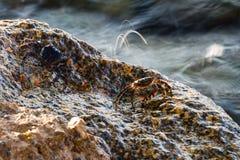 Mały krab bierze prysznic obraz royalty free