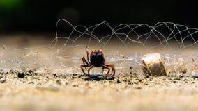 Mały kraba oklepiec w fisher sieci zdjęcie royalty free