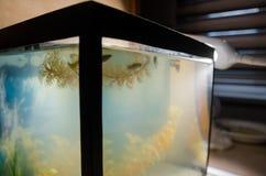 Mały kwadratowy akwarium z rybą zdjęcie stock