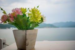 Mały kwiat który jest w drewnianym garnku Przy plecy jest wielka rzeka w Europa Danube obraz royalty free