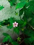 Mały kwiat minimalista zdjęcia royalty free