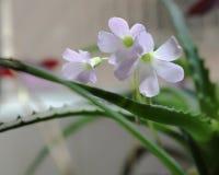 Mały kwiat w São Paulo Brazylia zdjęcie royalty free