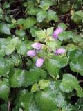 Mały kwiat z padać dzień Zdjęcie Royalty Free