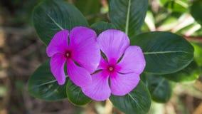Mały kwiatu światło dzienne Zdjęcie Stock
