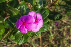 Mały kwiatu światło dzienne Zdjęcia Stock