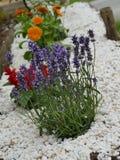 Mały kwiatu rockery obrazy royalty free