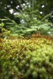Mały lasowy narastający wysoki Obraz Royalty Free