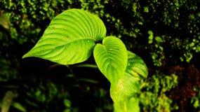 mały liści, Obrazy Stock