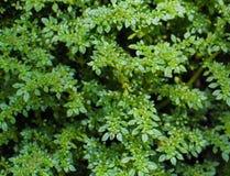 mały liści, zdjęcie stock