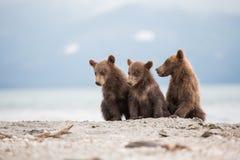 Mały lisiątek czekać jego matkuje niedźwiedzia Zdjęcia Stock