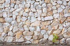 Mały lub roślina dorośnięcie na rockowej ścianie Zdjęcia Stock