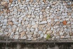 Mały lub roślina dorośnięcie na rockowej ścianie Zdjęcie Royalty Free