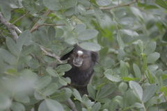 Mały małpi chować w obfitolistnej roślinie Fotografia Stock